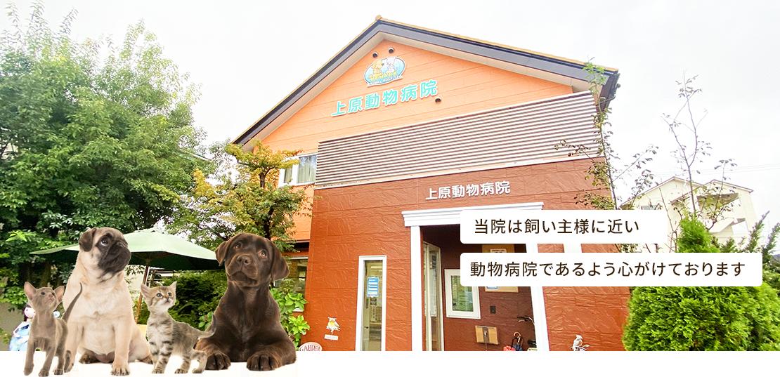 当院は飼い主様に近い動物病院であるよう心がけております